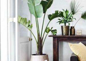 GAA-idee per decorare muri bianchi, piante, studio di architettura torino e milano,suggerimenti di arredo